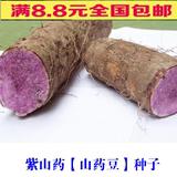 紫山药种子 滋阴补肾 补气血 蔬菜种子 10粒 紫参淮山 蔬菜籽人参