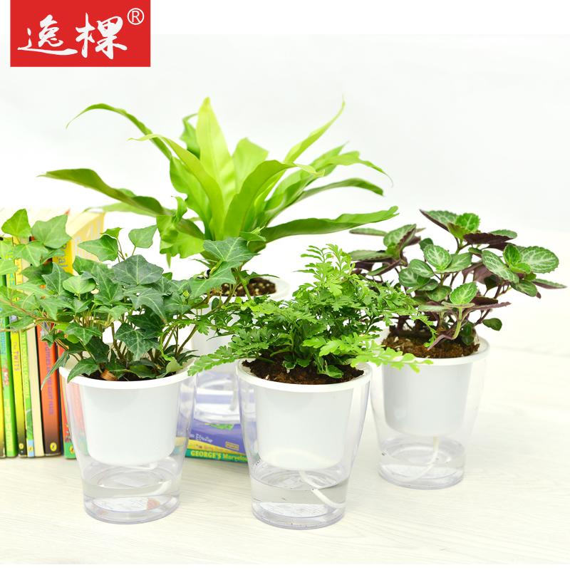 49包邮绿植透明自动吸水花盆室内绿植