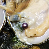 (Welfare clam link) Edison freshwater pearl oysters more pearl oysters open oysters take pearls live their own open