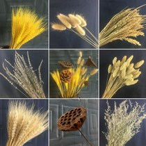 Natural wheat ear dried flower bouquet opening barley cotton ins wind home living room bedroom office decoration ornaments