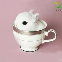 Rabbit living small pet Lop rabbit tea cup rabbit mini rabbit Princess rabbit grow up a little white rabbit