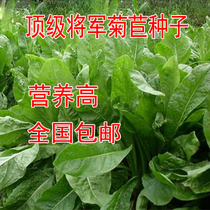 General chicory seeds high-quality high-yielding pig vegetables seeds chicory forage seeds chicken duck goose fish rabbit love to eat