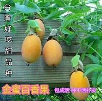 2019 new home accessories new varieties of gold honey passion fruit seedlings pure sweet banana fruit sweet honey red meat fragrance*
