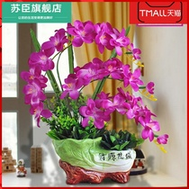 Dry flower living room simulation flower set flower butterfly orchid flower flower flower potted table tea table home decoration ornaments