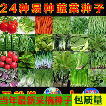 Vegetable seeds four seasons sowing balcony vegetables garden autumn and winter radish package potted spinach small onion parsley leek seeds