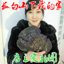 Authentic Changbai Mountain purple Ganoderma lucidum Ganoderma 500g semi-wild pruning Ganoderma can be sliced genuine special