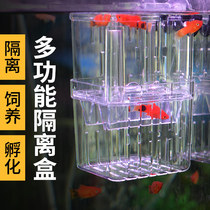 Peacock fish breeding box fish tank small incubator box acrylic young fish under the mother fish small fish delivery room isolation network