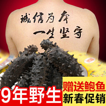 Hong Han Tang light dry goods sea cucumber Dalian wild 50g Liaoning ginseng shot 10 copies of 500 grams of dry 60 thorn sea cucumber gift box seaweed