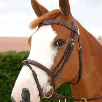 Belgian Dyon Equestrian Sule Horse riding water disorder competition water le bridle reins horse bridle
