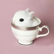Rabbit Live small pet Lop rabbit tea cup rabbit mini rabbit Princess rabbit grow up a pair of small white rabbit