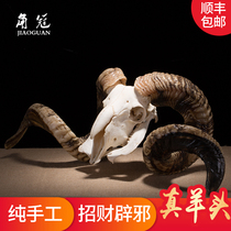 Factory direct possession of real sheep skull Yak skull crafts sheep head ornaments sheep head cow head decoration