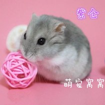 Adorable pet nest nest two small hamster dormitory pet hamster Live Live baby a pair of three silver fox pudding