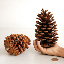 15cm large pine cones pine cone Christmas window decoration home decoration DIY dried flower material