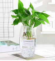 Hydroponic plant glass bottle transparent glass vase container flowerpot round water plant utensils glass pot