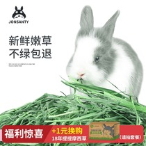 Pet is still the Day 2019 Timothy grass 2lb Dutch pig feed Chinchilla rabbit grain Timothy hay rabbit pasture guinea pig