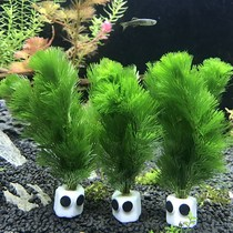 Aquarium goldfish soil-free lazy submerged wood weeds without mud aquatic entry-level without the bottom sand soft