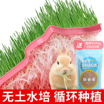 High quality rabbit wheat grass hydroponic without soil seed planting set guinea pig Chinchillas fresh grass seeds rabbit snacks