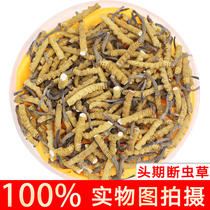 Tibet that song Fresh cordyceps cordyceps broken grass bulk large broken cordyceps authentic 10 grams of winter cordyceps gift box