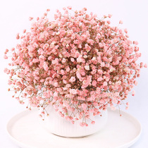Gypsophila dried flower bouquet home furnishings decoration small fresh dried flower living room office decoration dried bouquet