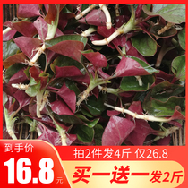 Houttuynia cordata ear root fresh leaves 1 kg of sprouts fish heart Sichuan specialty salad instant ear root
