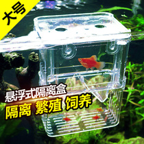 Fry breeding box peacock fish production fish hatching box fish tank transparent isolation box young fish bucket fish box isolation box Large