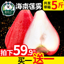 (Buy 1 Get 1 free) Hainan lotus fruit fresh fruit wholesale season even fog season mist Lotus with Box 5 pounds