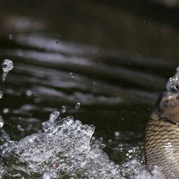 """论""""鱼钩数量""""在野钓中的重要性"""